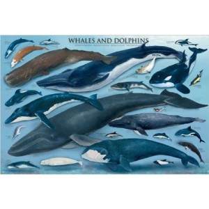 ポスター Whales and Dolphins 2081