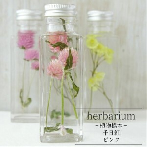 【herbarium Bottle】ハーバリウム 角ボトル スクエアミニ  千日紅 ピンク -植物標本-母の日ギフト