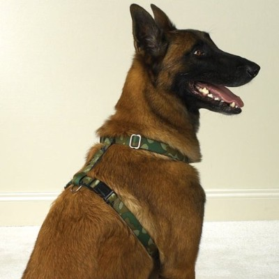 Pet Pals ZA581 14 43 Guardian Gear Camo Harness 14-20 In Green