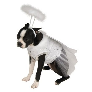 Rubie's Angel Pet Costume, Small by Rubie's