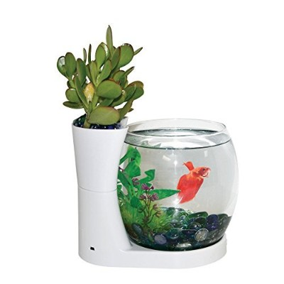 Elive Betta Bowl & Planter White [並行輸入品]