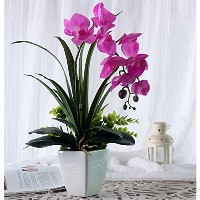 Zhhlaixing 品質 A03 Gorgeous Phalaenopsis Artificial Flowers Plus Buds Bush with Jardiniere Flower...