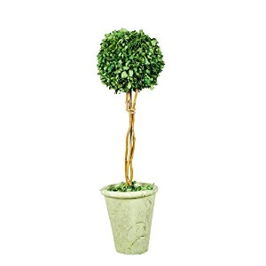 Galt International Naturally Preserved Real Boxwood Ball Topiary Plant with Twig Stem and Restoratio...
