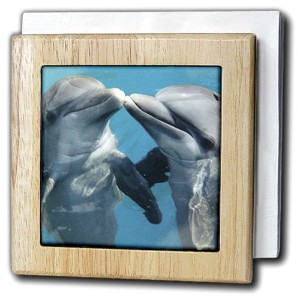 3dローズFlorene Nature – Dolphin Play – タイルナプキンホルダー 6 inch tile napkin holder nh_8608_1