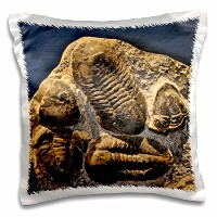 3dローズKike Calvo化石恐竜写真 – Phacopidae TrilobitesからThe Devonic in Morrocco – 枕ケース 16x16 inch Pillow...